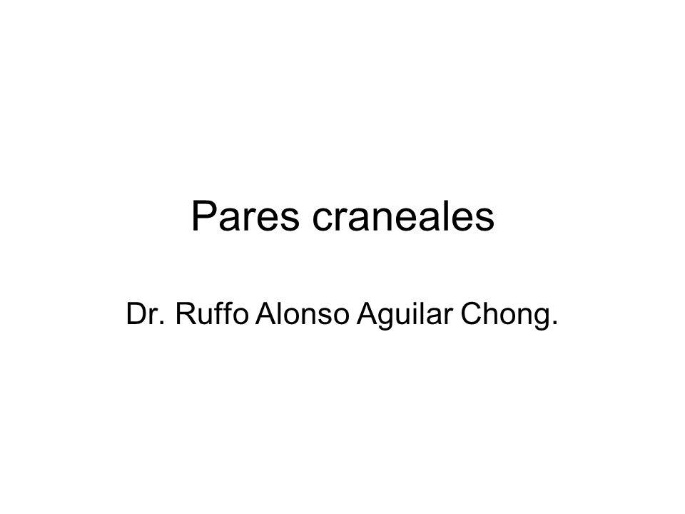 Pares craneales Dr. Ruffo Alonso Aguilar Chong.