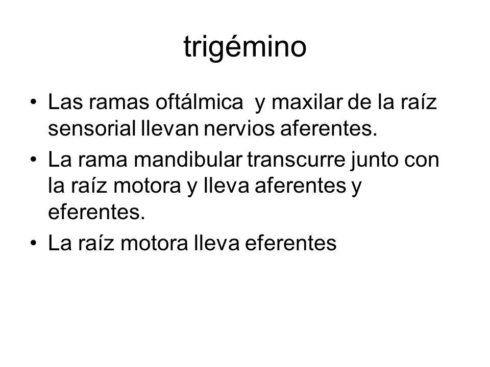 Rama oftálmica del trigémino (nervio oftálmico) Nervio aferente para conjuntiva, córnea, globo ocular, órbita, frente y senos etmoidales y frontales, además de una parte de la duramadre.