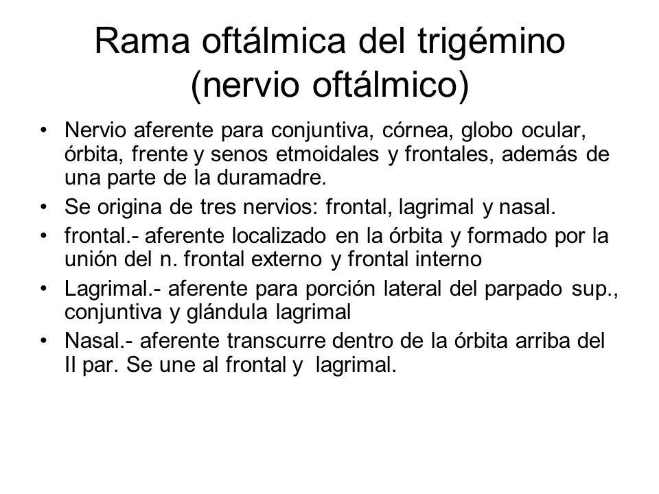 Rama oftálmica del trigémino (nervio oftálmico) Nervio aferente para conjuntiva, córnea, globo ocular, órbita, frente y senos etmoidales y frontales,