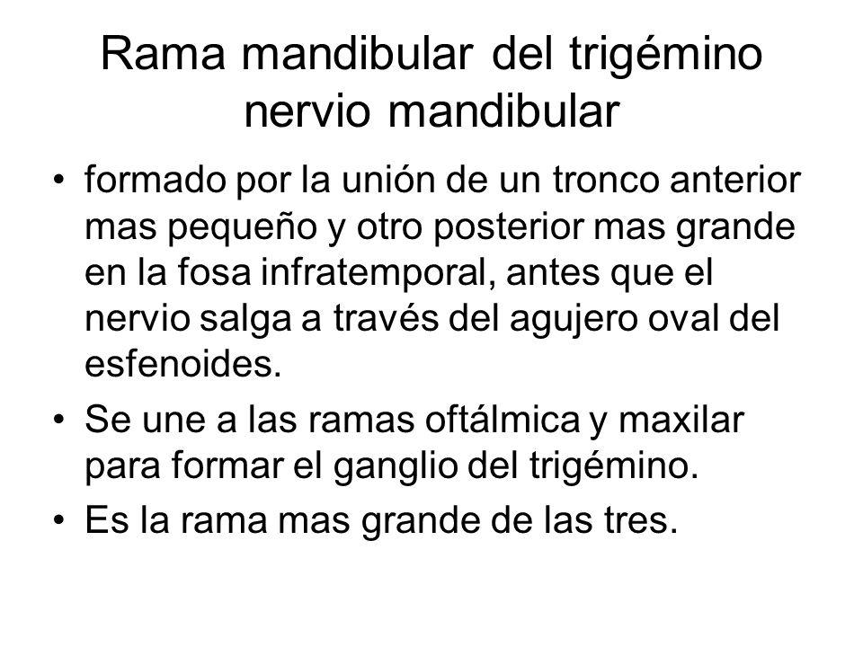Rama mandibular nervio mandibular Tronco anterior esta formado por la unión del nervio bucal y las ramas nerviosas musculares adicionales.