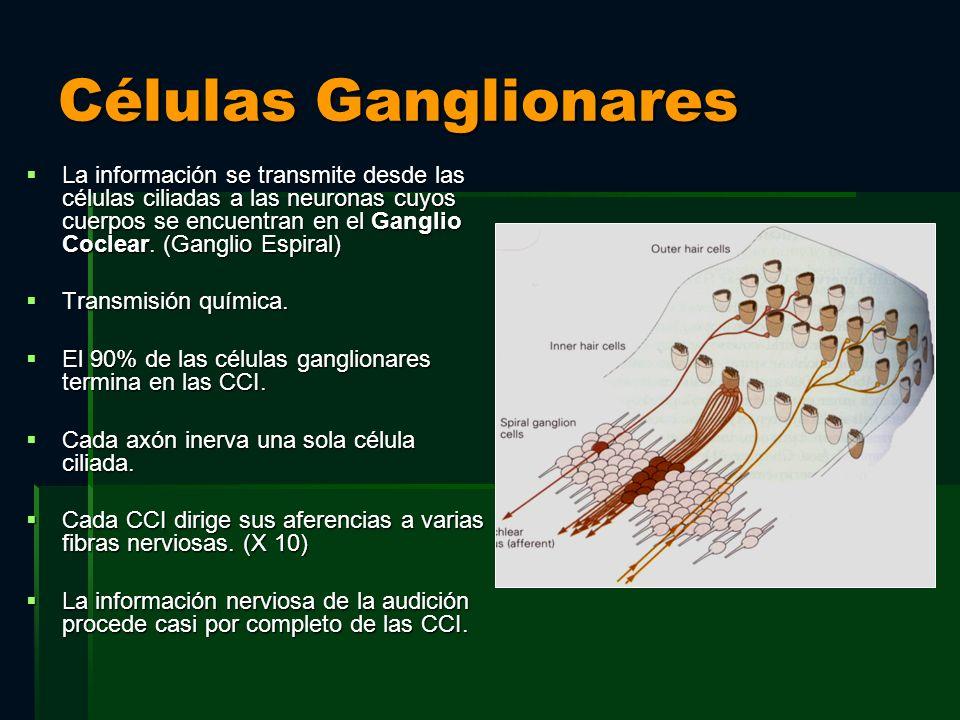 Células Ganglionares La información se transmite desde las células ciliadas a las neuronas cuyos cuerpos se encuentran en el Ganglio Coclear. (Ganglio