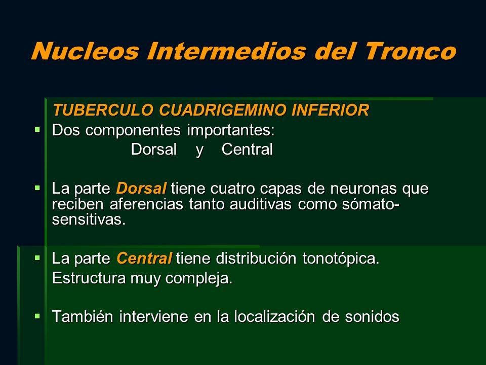 Nucleos Intermedios del Tronco TUBERCULO CUADRIGEMINO INFERIOR Dos componentes importantes: Dos componentes importantes: Dorsal y Central La parte Dor