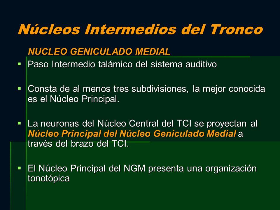 Núcleos Intermedios del Tronco NUCLEO GENICULADO MEDIAL Paso Intermedio talámico del sistema auditivo Paso Intermedio talámico del sistema auditivo Co