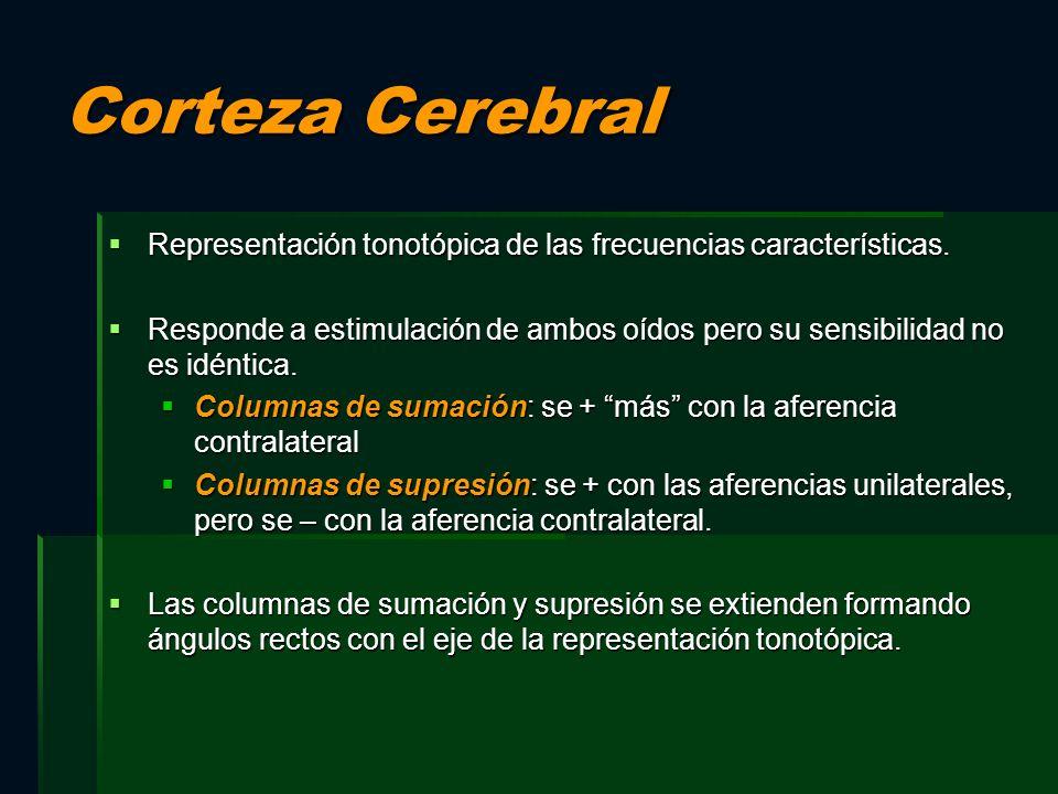 Corteza Cerebral Representación tonotópica de las frecuencias características. Representación tonotópica de las frecuencias características. Responde