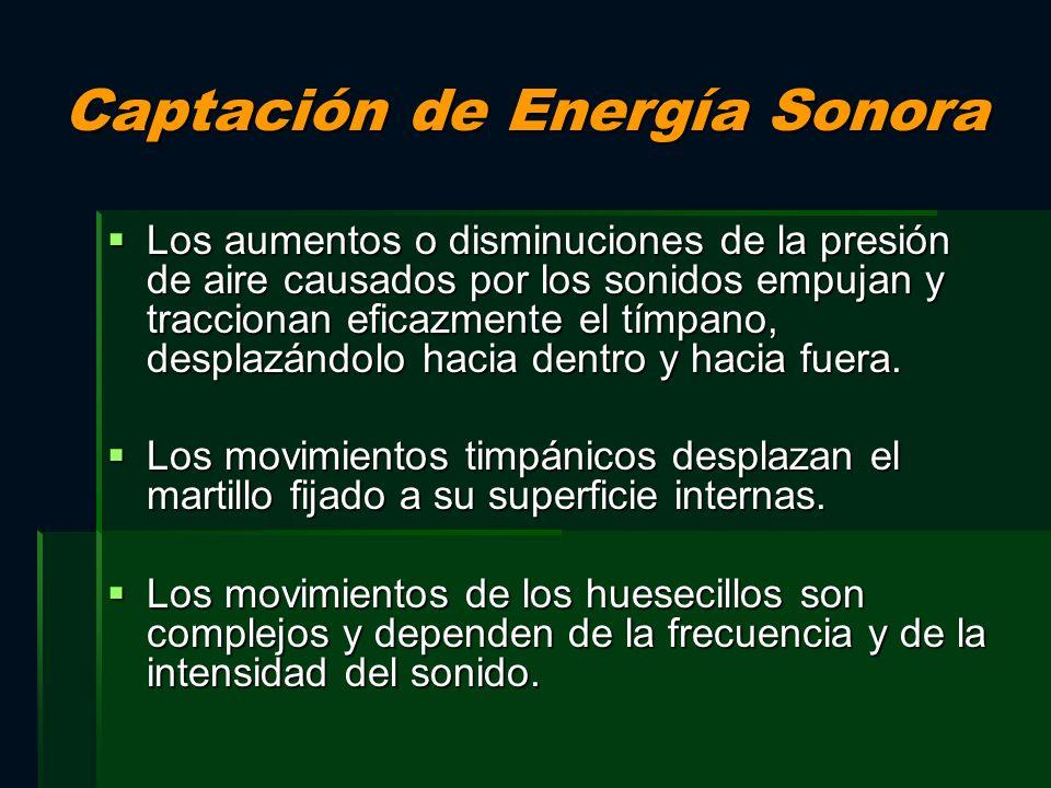 Captación de Energía Sonora Los aumentos o disminuciones de la presión de aire causados por los sonidos empujan y traccionan eficazmente el tímpano, d