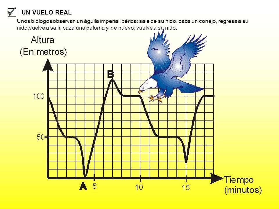 UN VUELO REAL Unos biólogos observan un águila imperial ibérica: sale de su nido, caza un conejo, regresa a su nido,vuelve a salir, caza una paloma y,