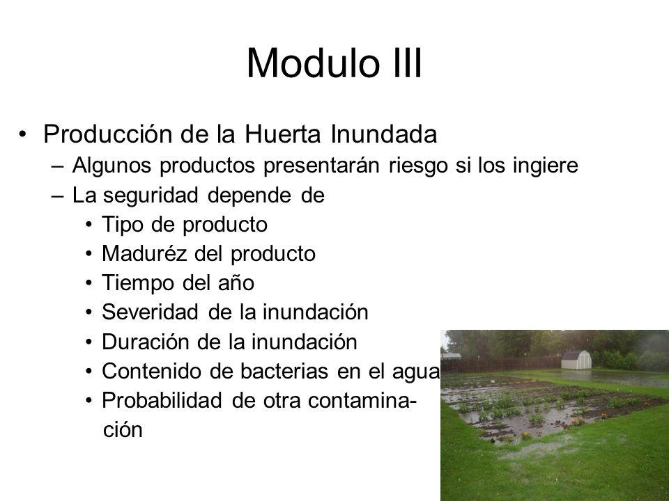Modulo III Producción de la Huerta Inundada –Algunos productos presentarán riesgo si los ingiere –La seguridad depende de Tipo de producto Maduréz del producto Tiempo del año Severidad de la inundación Duración de la inundación Contenido de bacterias en el agua Probabilidad de otra contamina- ción