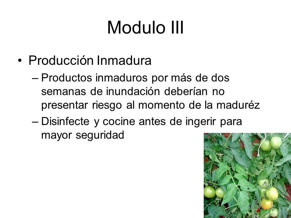 Modulo III Producción Inmadura –Productos inmaduros por más de dos semanas de inundación deberían no presentar riesgo al momento de la maduréz –Disinfecte y cocine antes de ingerir para mayor seguridad