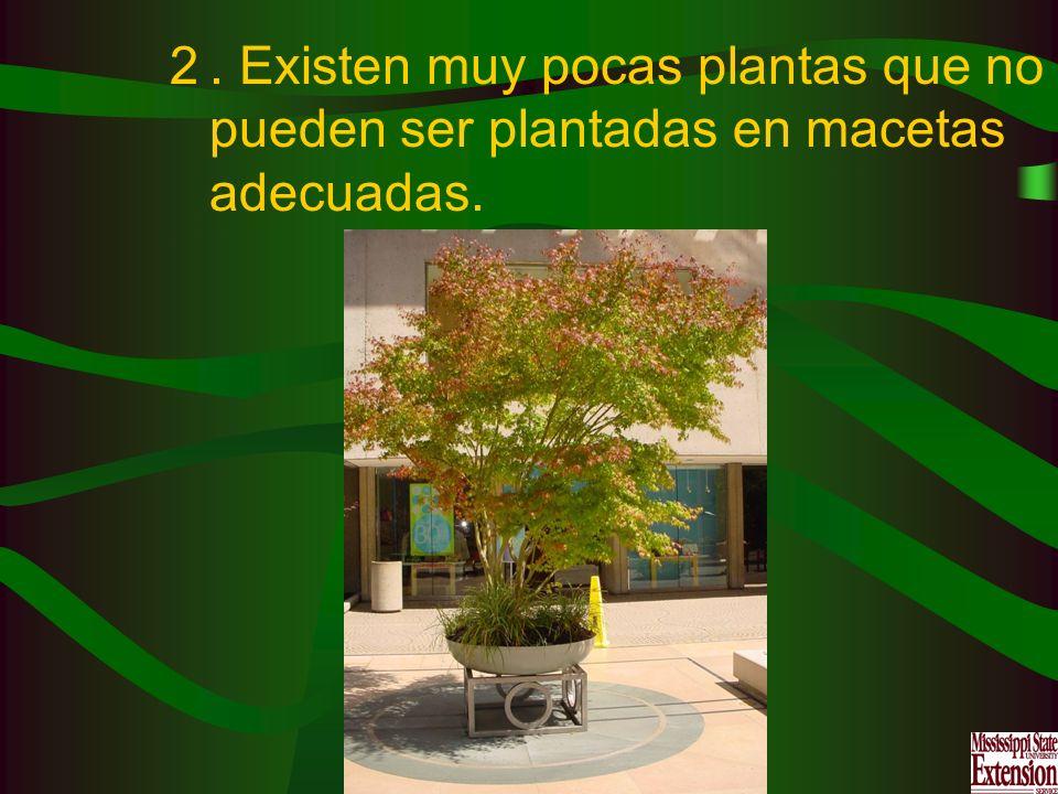 2. Existen muy pocas plantas que no pueden ser plantadas en macetas adecuadas.