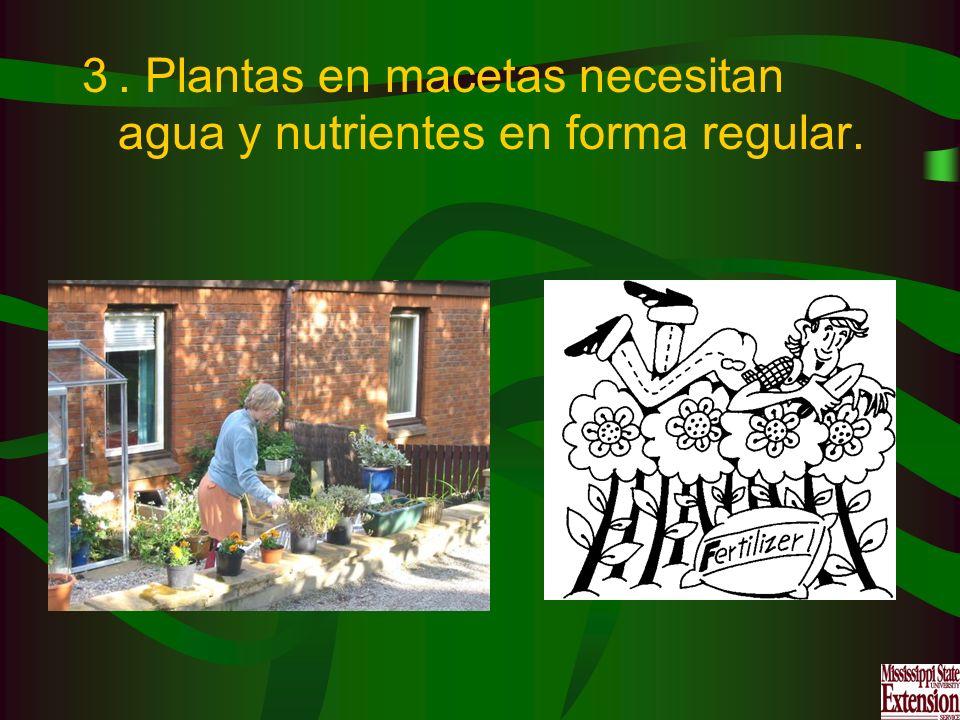 3. Plantas en macetas necesitan agua y nutrientes en forma regular.