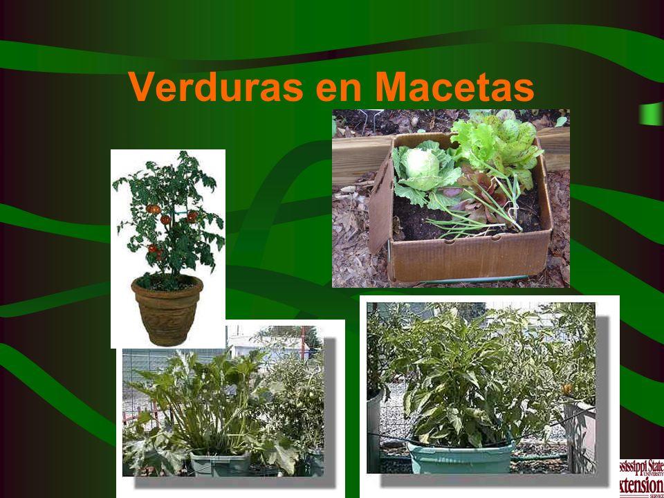 Verduras en Macetas
