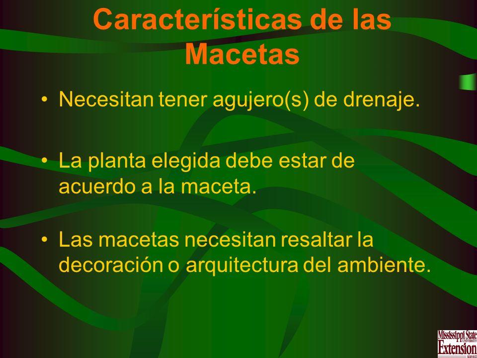 Características de las Macetas Necesitan tener agujero(s) de drenaje. La planta elegida debe estar de acuerdo a la maceta. Las macetas necesitan resal
