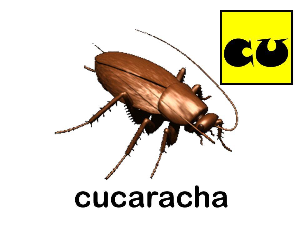 cu cucaracha