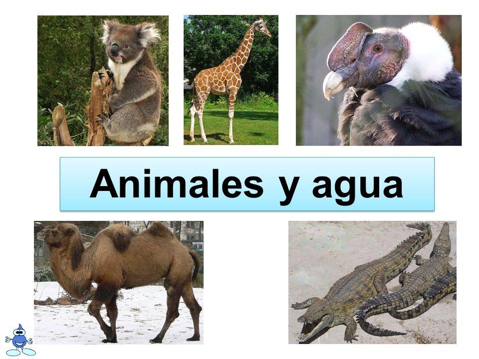 Objetivos: pensar en cómo cinco animales usan el agua escribir frases sobre cómo los animales usan el agua