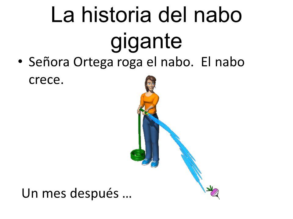 La historia del nabo gigante Aquí está el Señor Ortega. Planta unas semillas. Quiere tener un nabo. Un mes después …