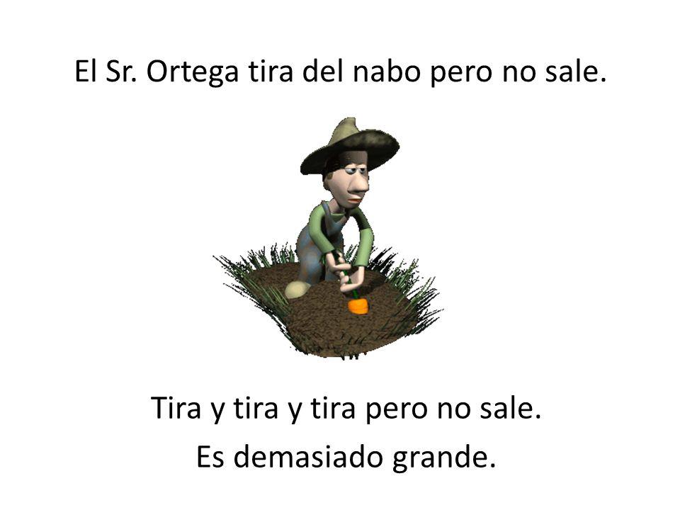 … El nabo crece y crece y crece. Es un nabo gigante. El Sr. Ortega dice, ¡Qué nabo gigante!