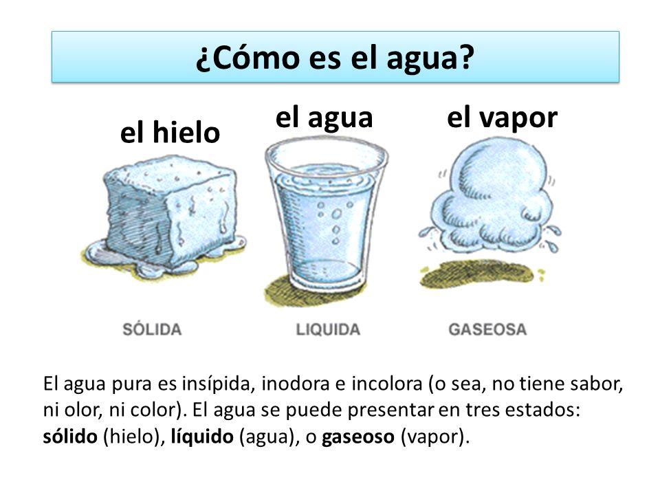 El agua pura es insípida, inodora e incolora (o sea, no tiene sabor, ni olor, ni color). El agua se puede presentar en tres estados: sólido (hielo), l