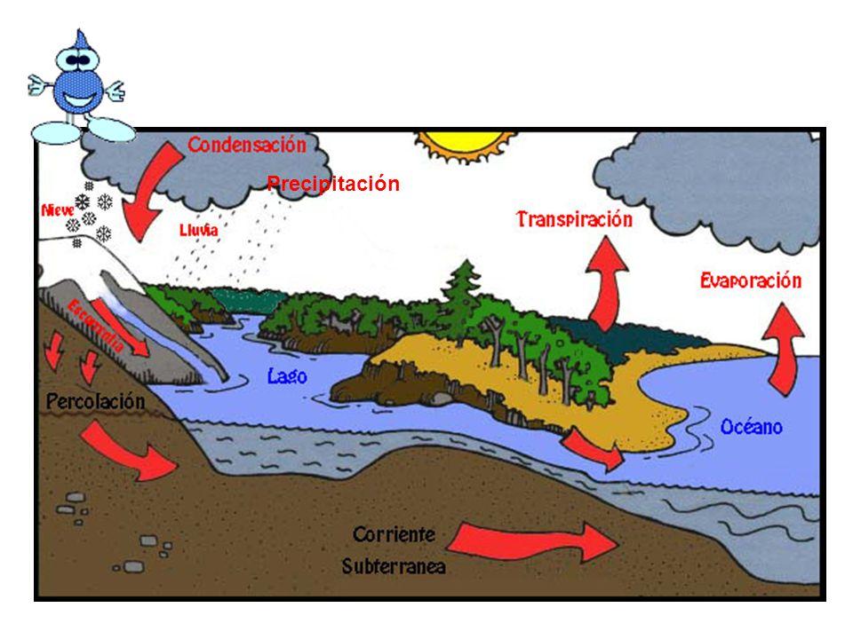 la evaporación la condensación la precipitación ¿Cómo se llaman estos procesos?