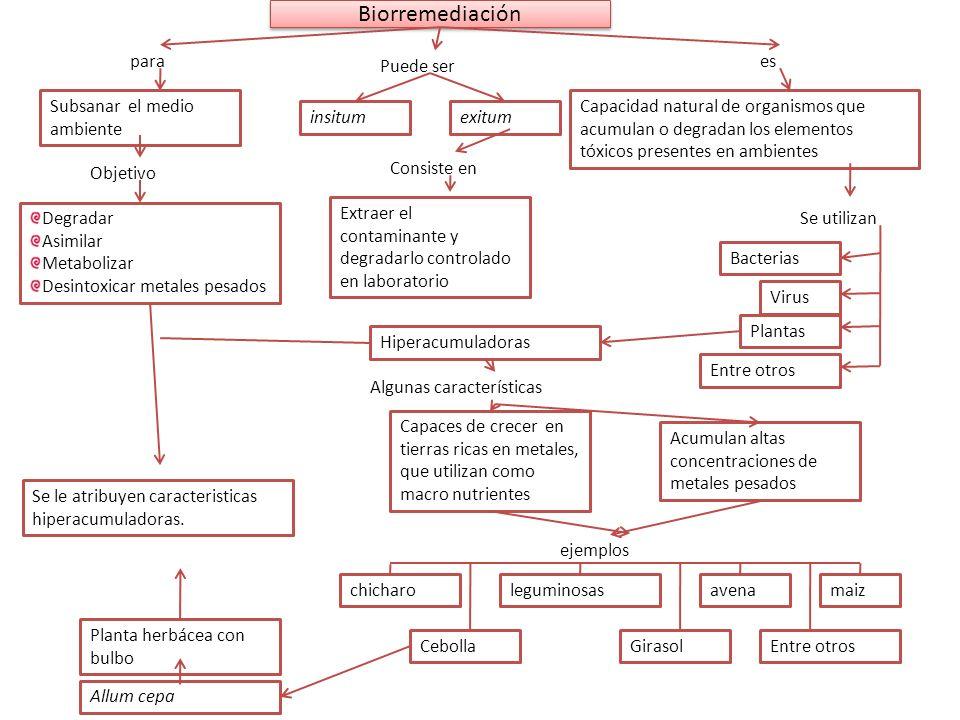 Biorremediación Objetivo Virus Subsanar el medio ambiente para Degradar Asimilar Metabolizar Desintoxicar metales pesados Capacidad natural de organis