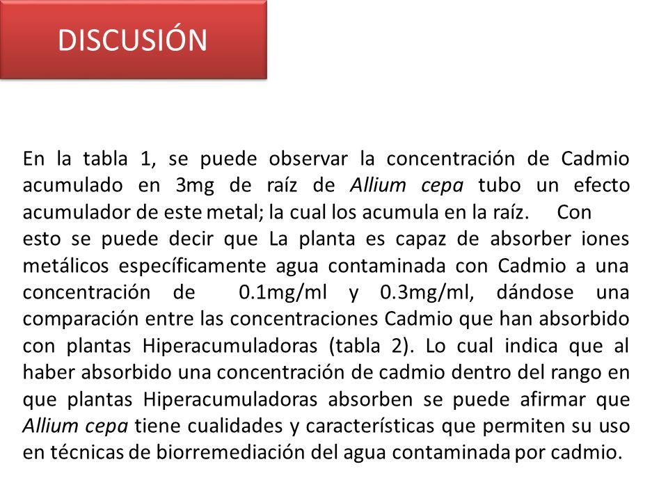 DISCUSIÓN En la tabla 1, se puede observar la concentración de Cadmio acumulado en 3mg de raíz de Allium cepa tubo un efecto acumulador de este metal; la cual los acumula en la raíz.