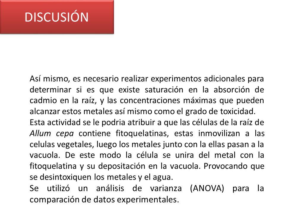 DISCUSIÓN Así mismo, es necesario realizar experimentos adicionales para determinar si es que existe saturación en la absorción de cadmio en la raíz,