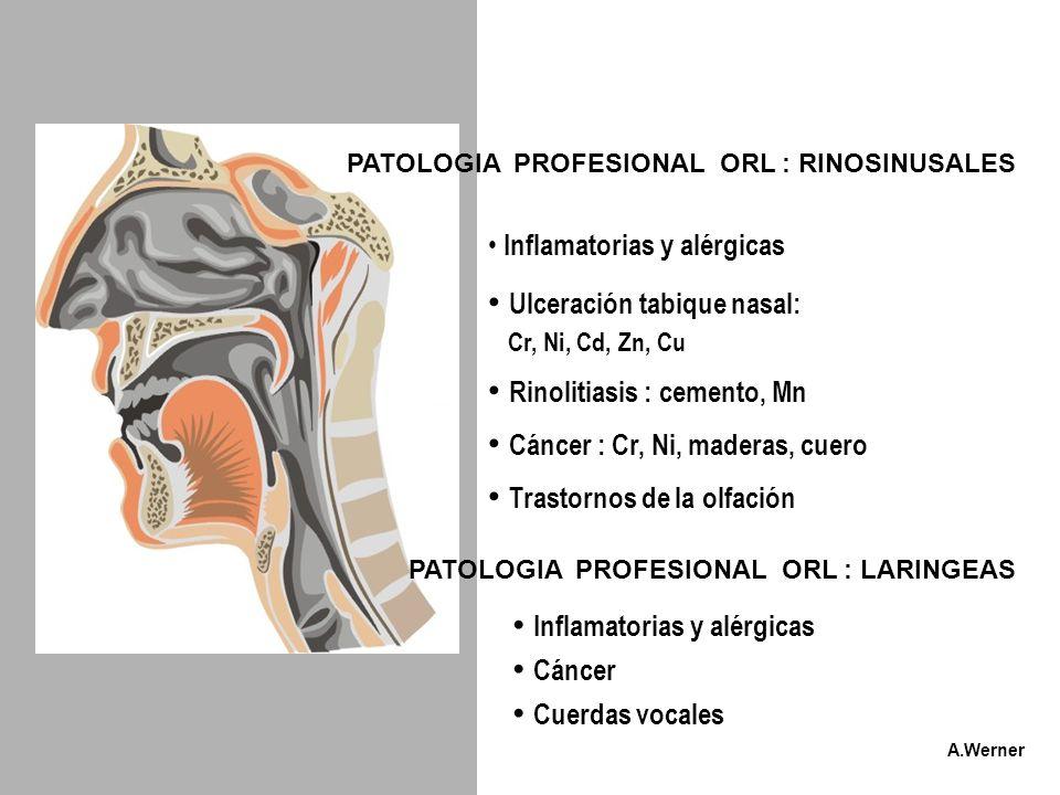 PATOLOGIA PROFESIONAL ORL : RINOSINUSALES PATOLOGIA PROFESIONAL ORL : LARINGEAS Inflamatorias y alérgicas Ulceración tabique nasal: Cr, Ni, Cd, Zn, Cu