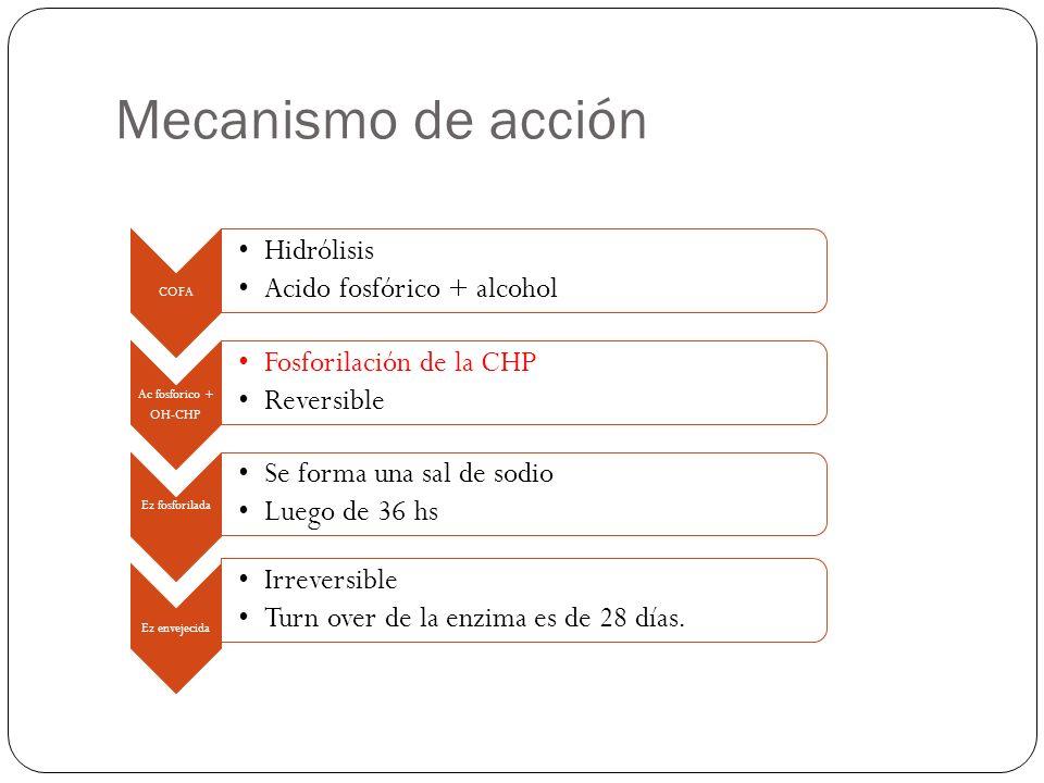Mecanismo de acción Acetilcolina CHP Colina+ acetilo Inhibición de CHP- CHEAumento de Acetilcolina Estimulación de receptores muscarínicos y nicotínicos -Se unen a las colinesterasas, especialmente las acetilcolinesterasa, inhibiendo la degradación de acetilcolina.