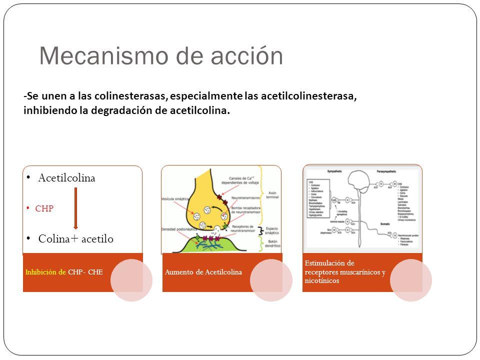 Mecanismo de acción Acetilcolina CHP Colina+ acetilo Inhibición de CHP- CHEAumento de Acetilcolina Estimulación de receptores muscarínicos y nicotínic