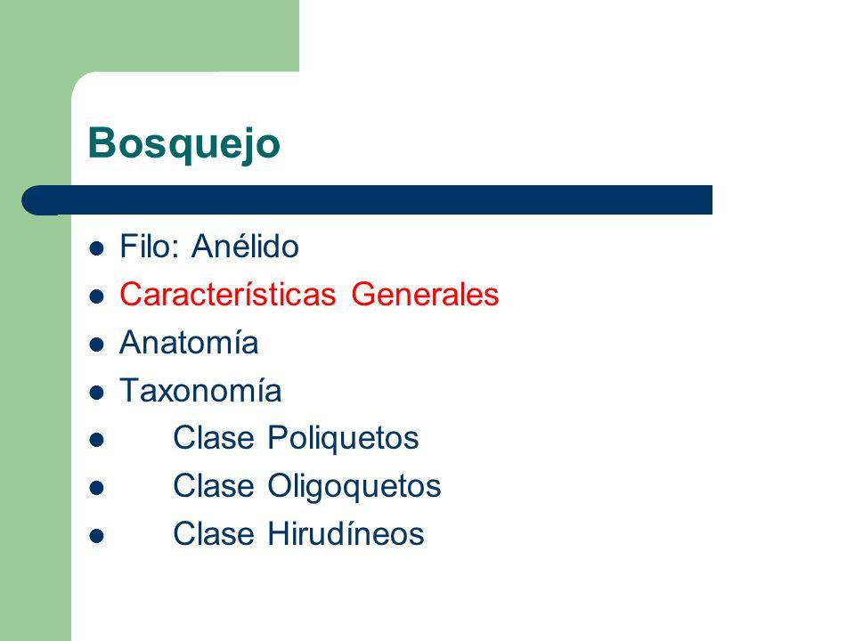 Características Generales Especies identificadas - 9,000 Incluye los gusanos de tierra, agua y sanguijuelas.