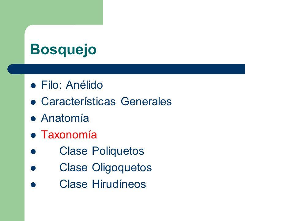 TAXONOMÍA: Clases principales: – Clase Poliquetos - ejs.