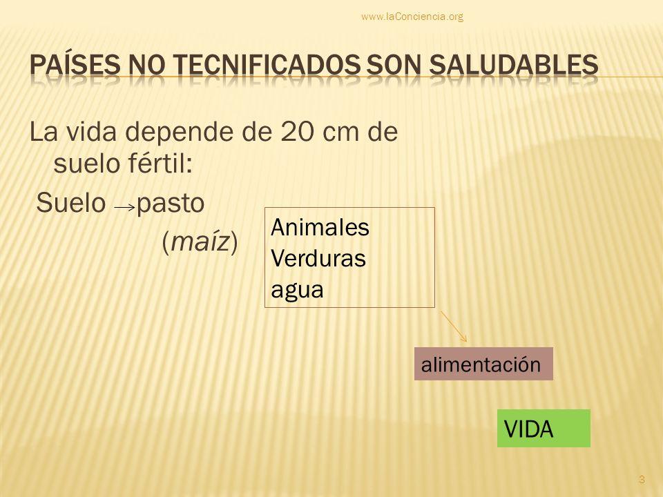 La vida depende de 20 cm de suelo fértil: Suelo pasto (maíz) Animales Verduras agua alimentación VIDA www.laConciencia.org 3