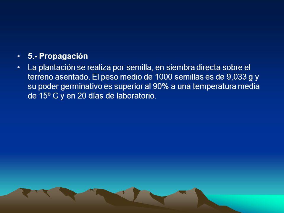 5.- Propagación La plantación se realiza por semilla, en siembra directa sobre el terreno asentado. El peso medio de 1000 semillas es de 9,033 g y su