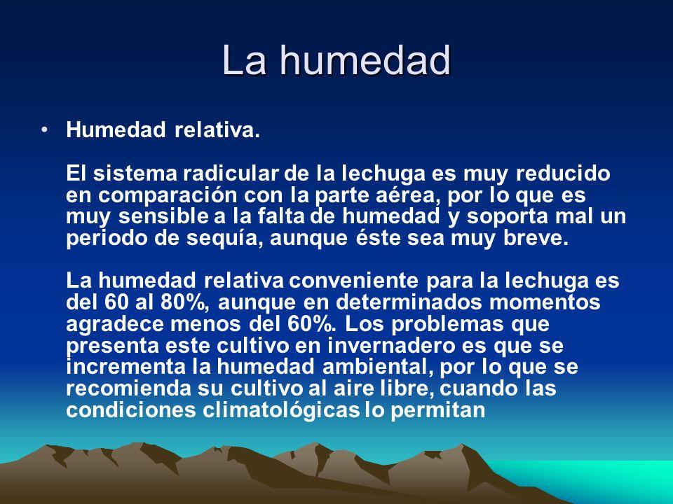 La humedad Humedad relativa. El sistema radicular de la lechuga es muy reducido en comparación con la parte aérea, por lo que es muy sensible a la fal
