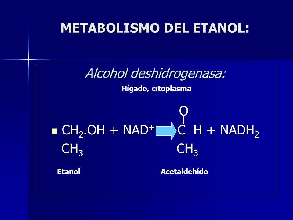 METABOLISMO DEL ETANOL: Alcohol deshidrogenasa: O CH 2.OH + NAD + C H + NADH 2 CH 2.OH + NAD + C H + NADH 2 CH 3 CH 3 CH 3 CH 3 EtanolAcetaldehído Híg