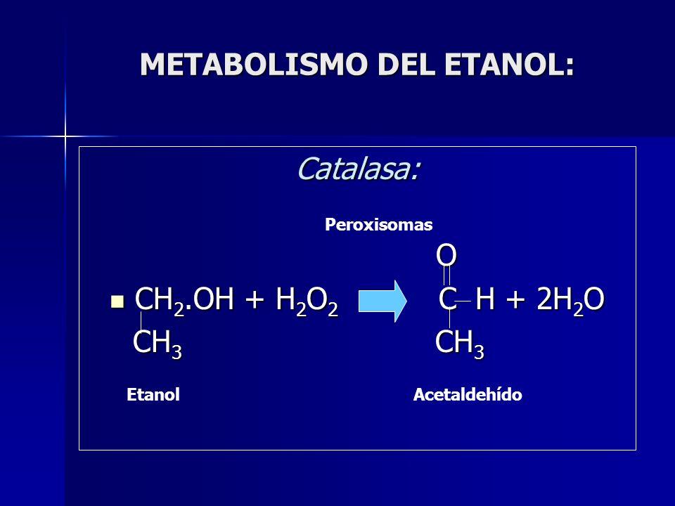 METABOLISMO DEL ETANOL: Catalasa: O CH 2.OH + H 2 O 2 C H + 2H 2 O CH 2.OH + H 2 O 2 C H + 2H 2 O CH 3 CH 3 CH 3 CH 3 Peroxisomas EtanolAcetaldehído