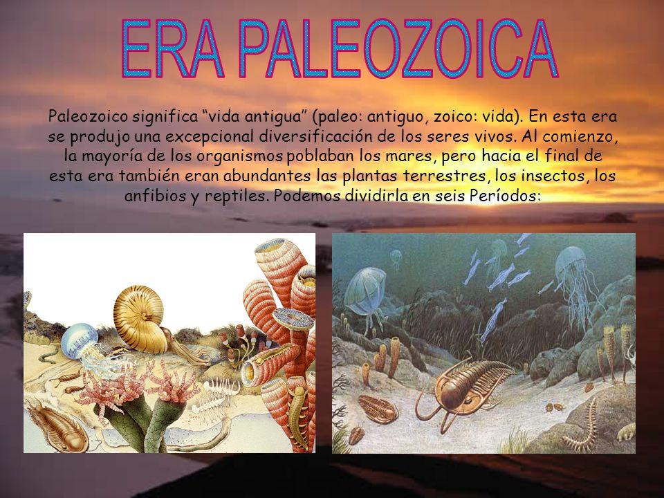 Paleozoico significa vida antigua (paleo: antiguo, zoico: vida). En esta era se produjo una excepcional diversificación de los seres vivos. Al comienz