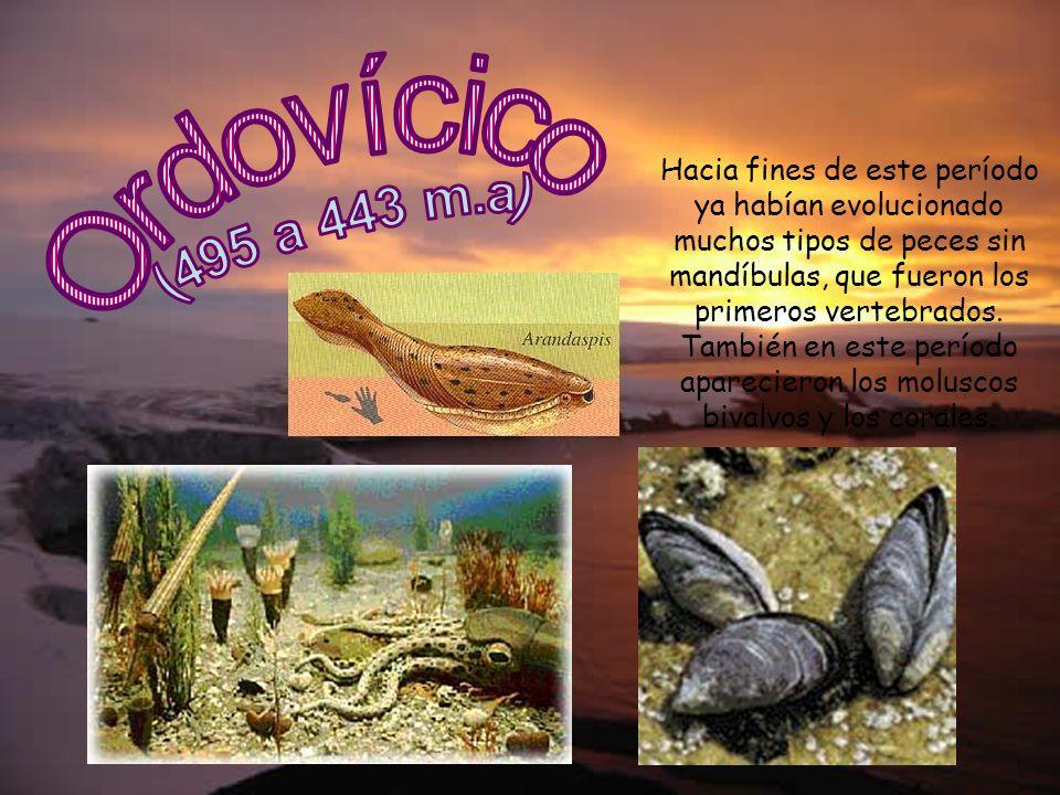 Hacia fines de este período ya habían evolucionado muchos tipos de peces sin mandíbulas, que fueron los primeros vertebrados. También en este período