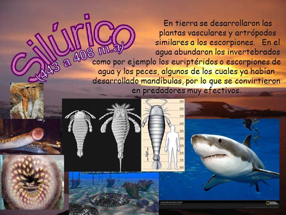 En tierra se desarrollaron las plantas vasculares y artrópodos similares a los escorpiones. En el agua abundaron los invertebrados como por ejemplo lo