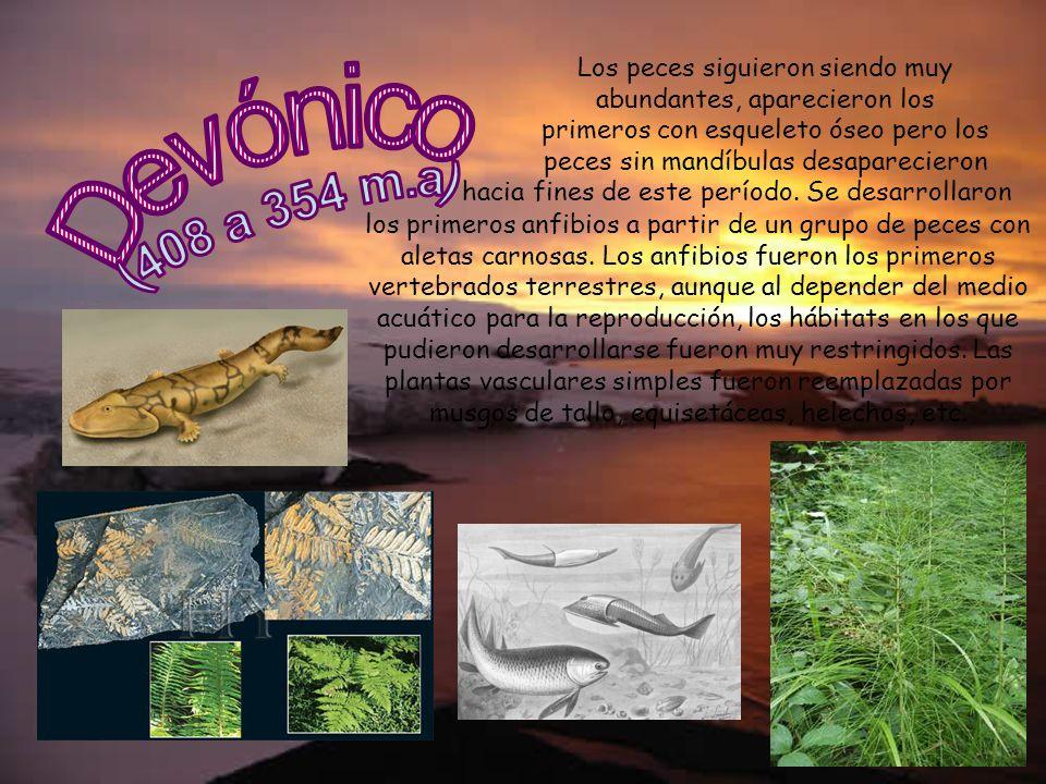 Los peces siguieron siendo muy abundantes, aparecieron los primeros con esqueleto óseo pero los peces sin mandíbulas desaparecieron los primeros anfib