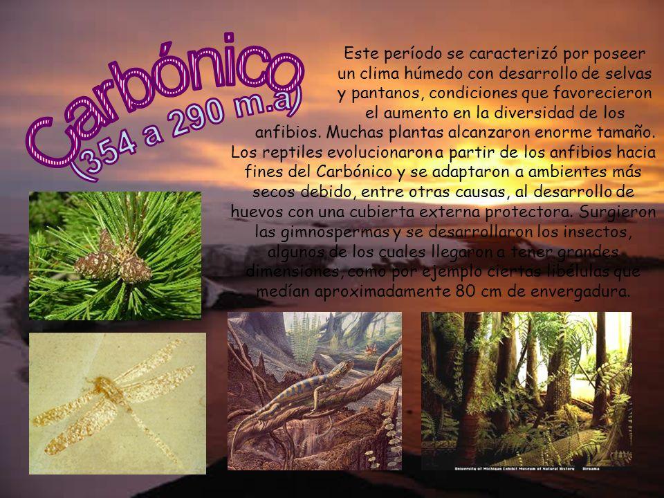 Este período se caracterizó por poseer un clima húmedo con desarrollo de selvas y pantanos, condiciones que favorecieron el aumento en la diversidad d
