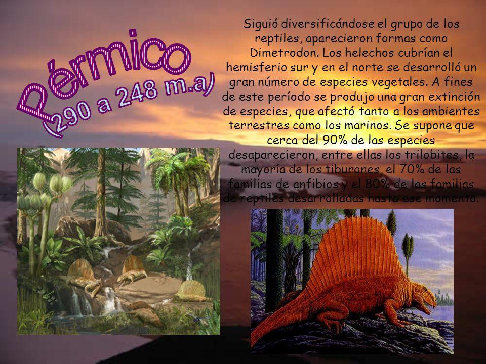 Siguió diversificándose el grupo de los reptiles, aparecieron formas como Dimetrodon. Los helechos cubrían el hemisferio sur y en el norte se desarrol