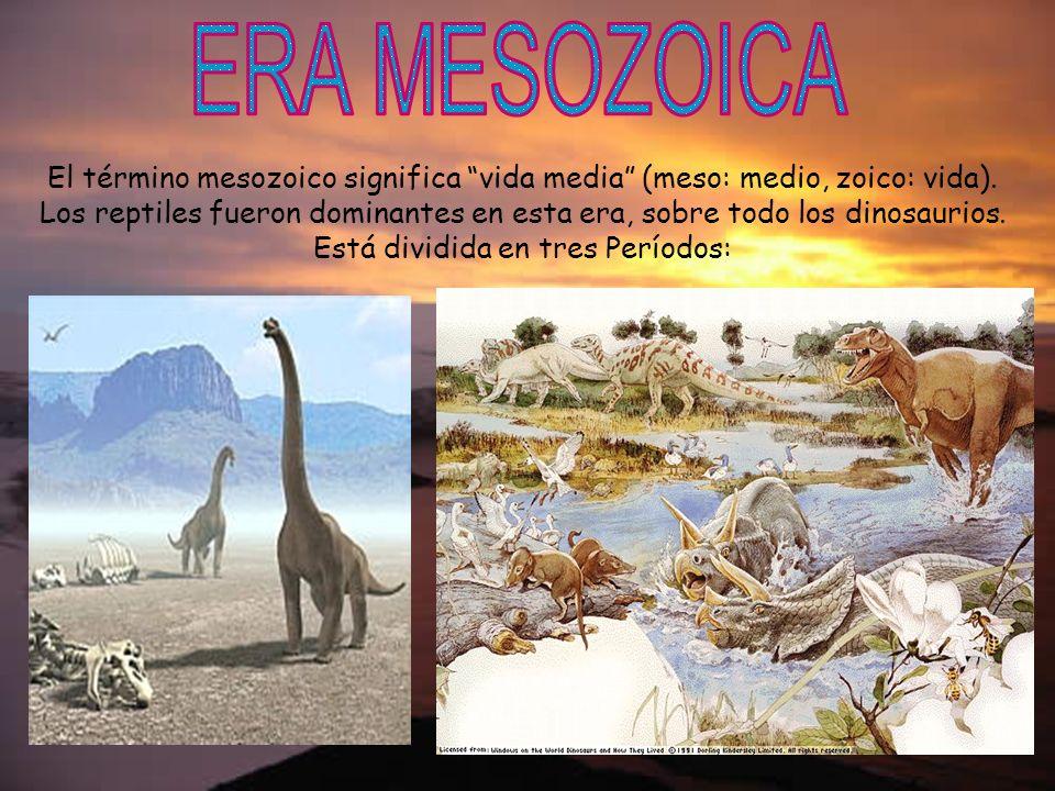El término mesozoico significa vida media (meso: medio, zoico: vida). Los reptiles fueron dominantes en esta era, sobre todo los dinosaurios. Está div