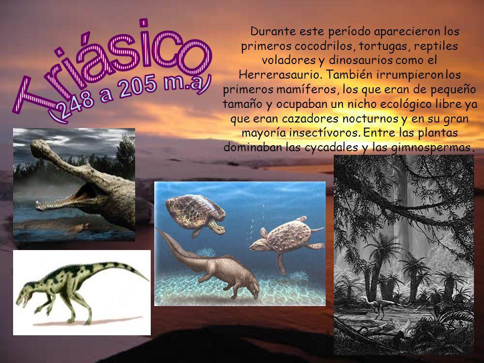 Durante este período aparecieron los primeros cocodrilos, tortugas, reptiles voladores y dinosaurios como el Herrerasaurio. También irrumpieron los pr