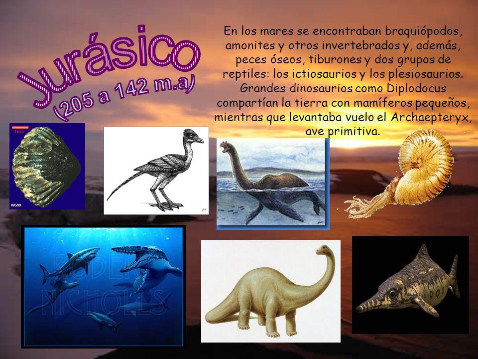 En los mares se encontraban braquiópodos, amonites y otros invertebrados y, además, peces óseos, tiburones y dos grupos de reptiles: los ictiosaurios