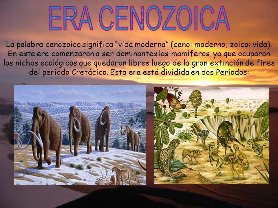La palabra cenozoico significa vida moderna (ceno: moderno, zoico: vida). En esta era comenzaron a ser dominantes los mamíferos, ya que ocuparon los n
