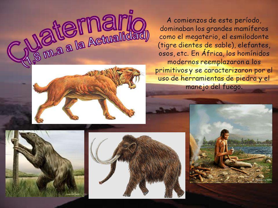 A comienzos de este período, dominaban los grandes mamíferos como el megaterio, el esmilodonte (tigre dientes de sable), elefantes, osos, etc. En Áfri