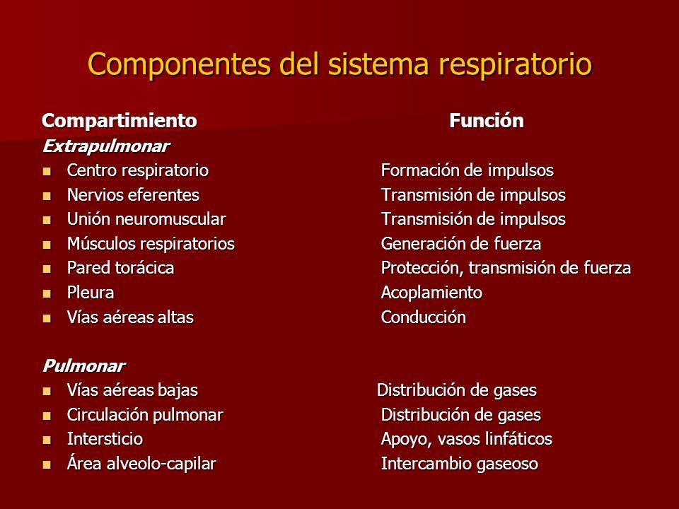Componentes del sistema respiratorio Compartimiento Función Extrapulmonar Centro respiratorio Formación de impulsos Centro respiratorio Formación de i