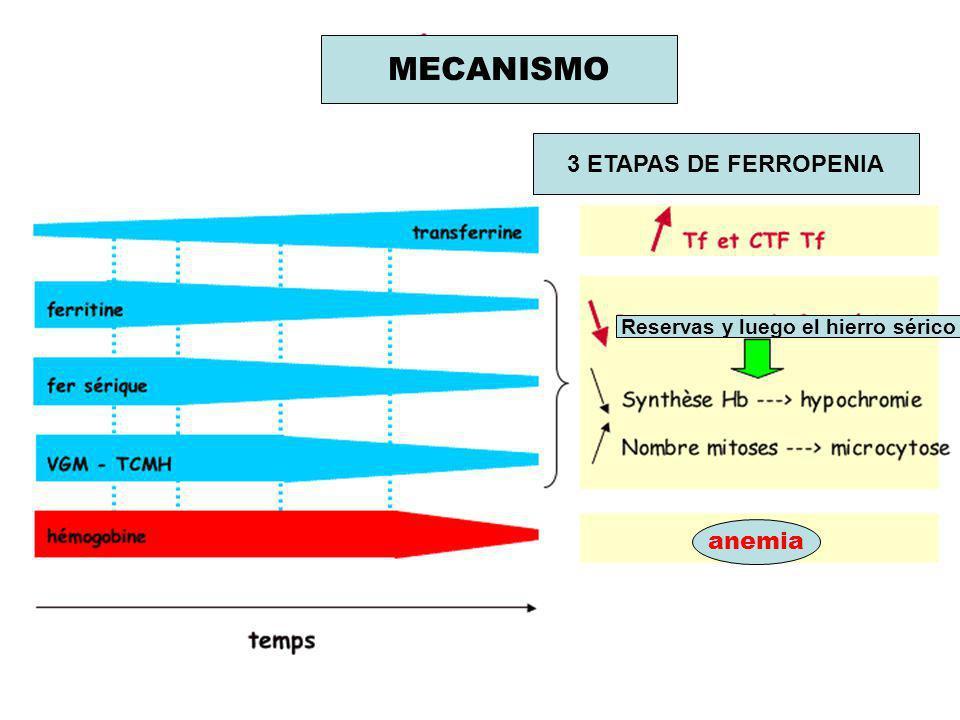 MECANISMO 3 ETAPAS DE FERROPENIA Reservas y luego el hierro sérico anemia