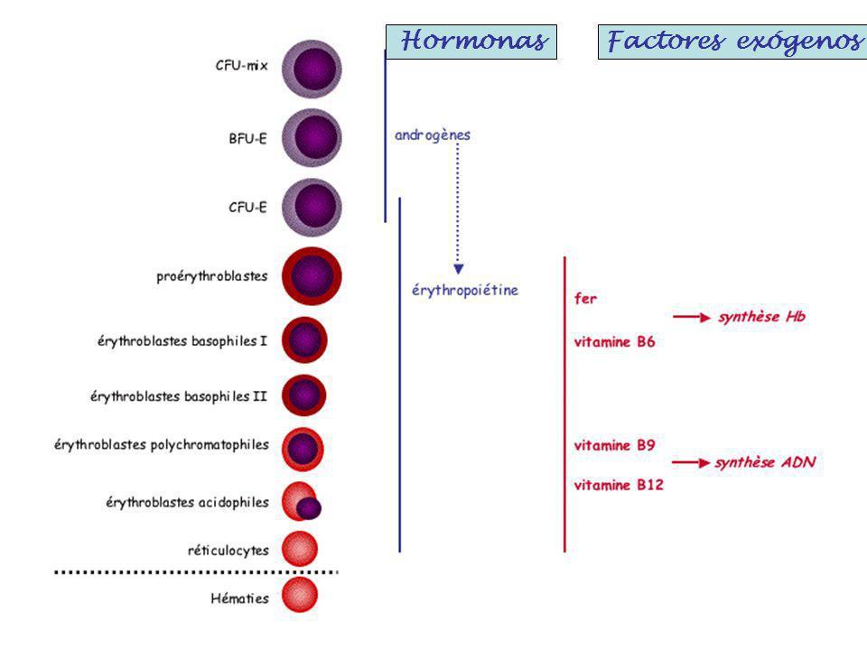 HormonasFactores exógenos