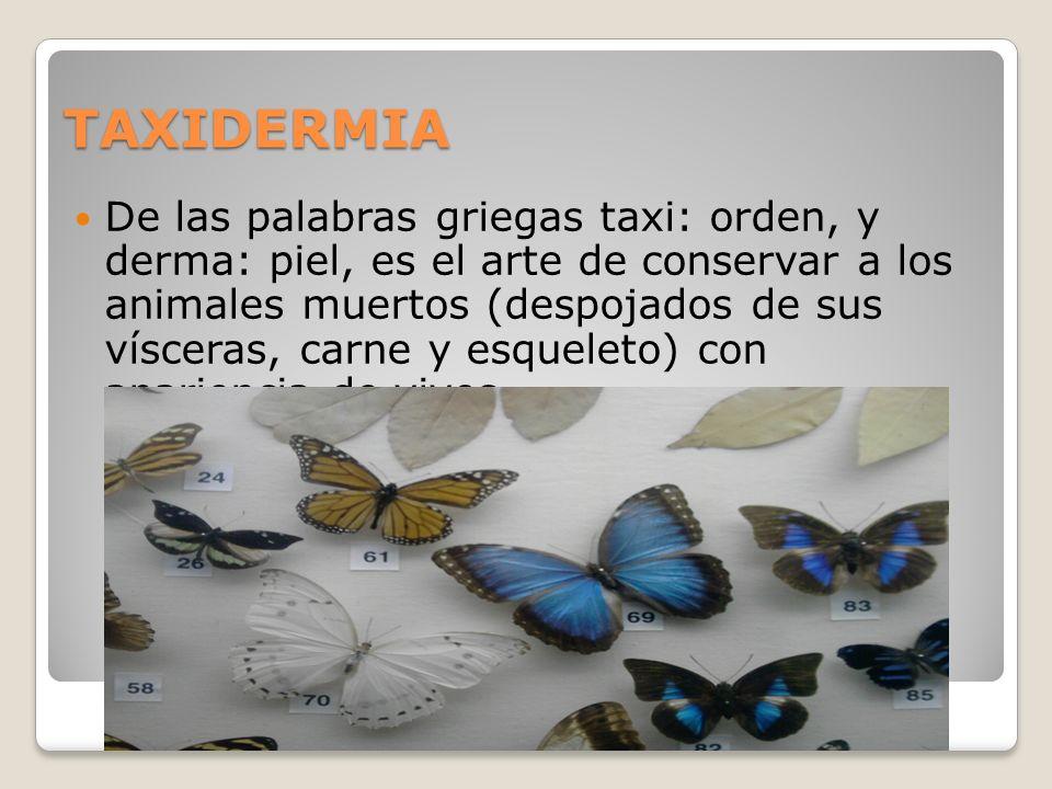 TAXIDERMIA De las palabras griegas taxi: orden, y derma: piel, es el arte de conservar a los animales muertos (despojados de sus vísceras, carne y esq